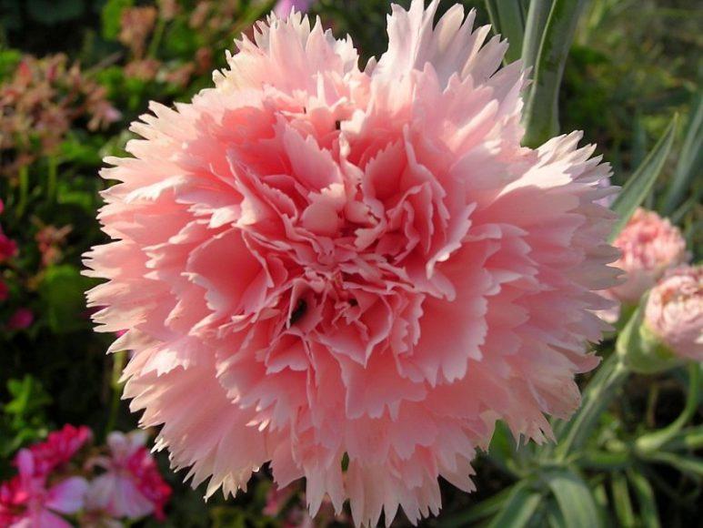 flores-corte-06